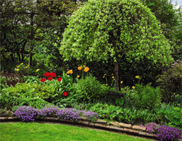 How to Reseed bare spots in your Lawn- By Maya Garg